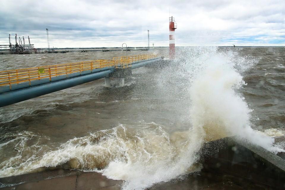 В петербургском Большом порту возведут новый нефтяной терминал. Фото: Смольный