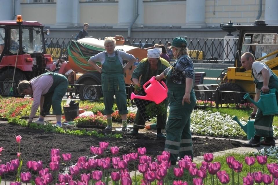На Большой высадят цветы за 1,3 миллиона рублей