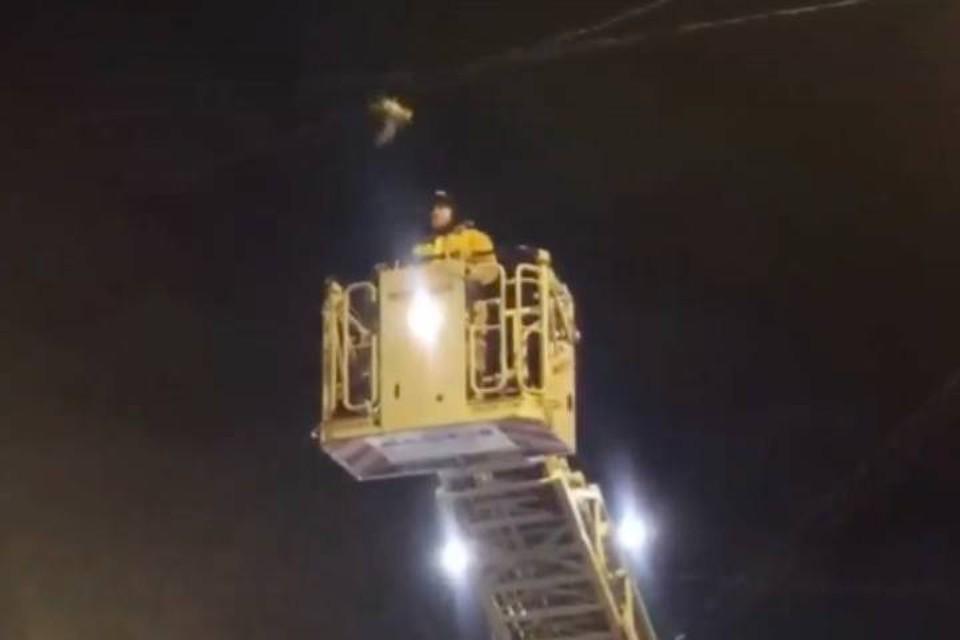Пожарные с автовышкой освободили белого голубя из электропроводов в Петербурге