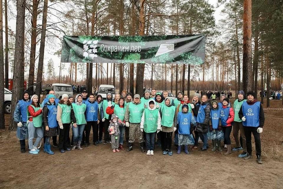 1000 молодых сосен высадил Сбер в рамках всероссийской экологической акции «Сохраним лес». Фото - Сбер.