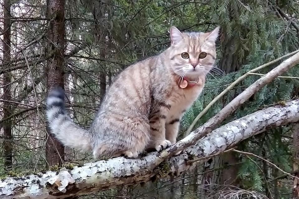 Миссис Норрис выживала в лесу 4 месяца и ждала хозяев