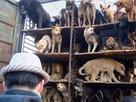 Зоозащитники спасли собак от поедания