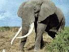 Цирковой слон помогает ликвидировать последствия урагана