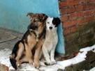 Старушку наказали за кормление бездомных псов