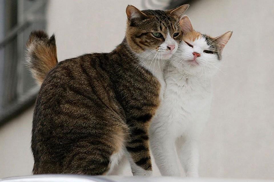 Кот инъекция секс