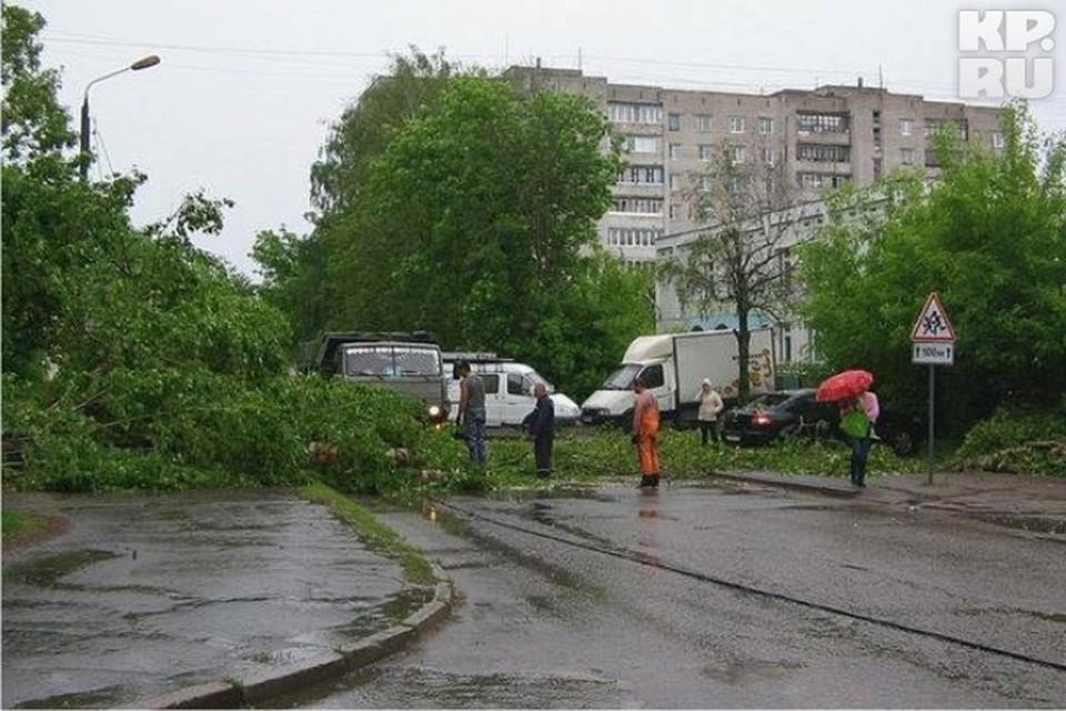 На улице Бобкова рухнул огромный тополь