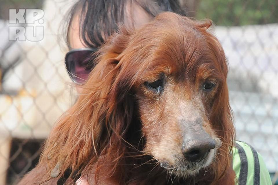 Для пса из рекламы собачьего корма, оказавшегося в кемеровском приюте, нашлась хозяйка
