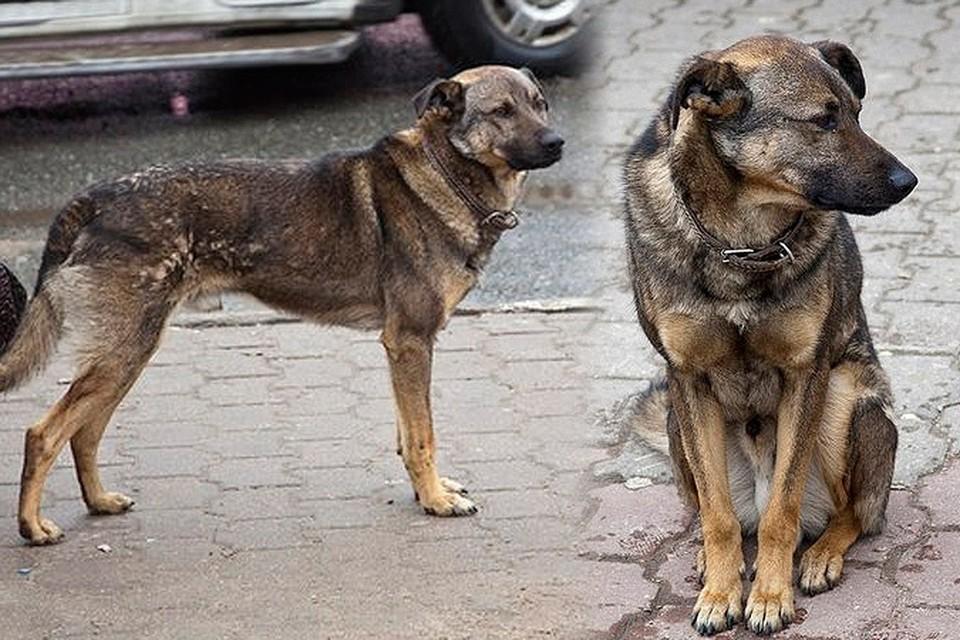 Собака почти 2 года ждала хозяина на остановке и стала местной знаменитостью пока кто-то не решил прикончить пса