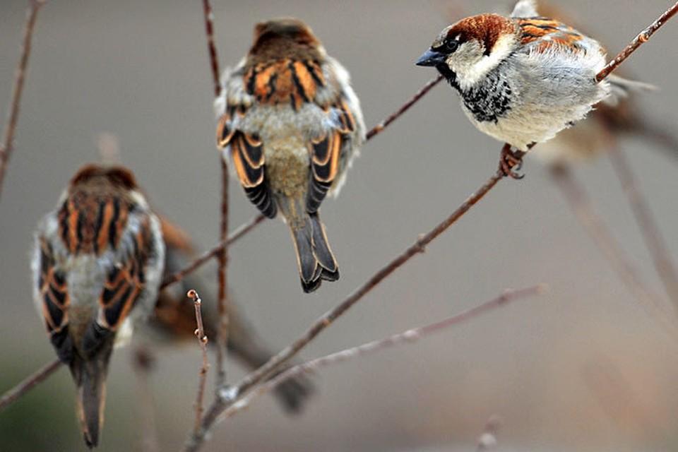 Птицы запели лечение наркомании скачать