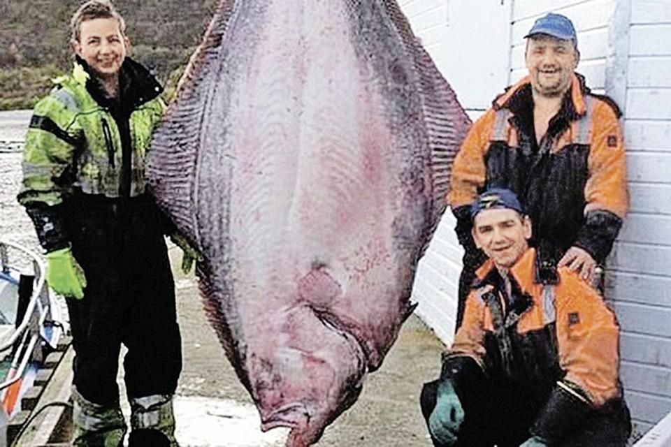 Вес этого палтуса - больше 200 кило! Фото: itromso.no