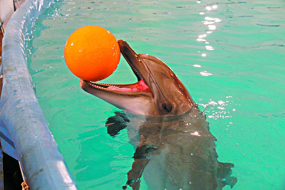 издания фото из дельфинария красноярск осознать