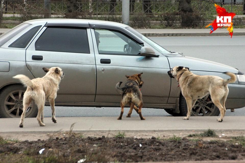 Как и когда в Уфе будут отлавливать бездомных животных?