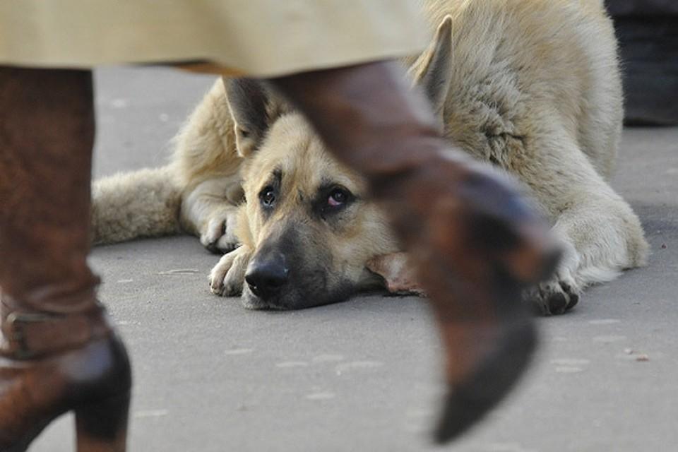 Как устроен бизнес на бродячих собаках