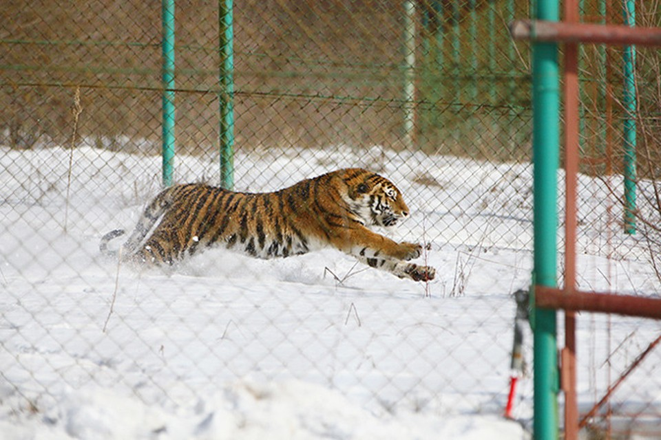 Фото: Специнспекции Тигр