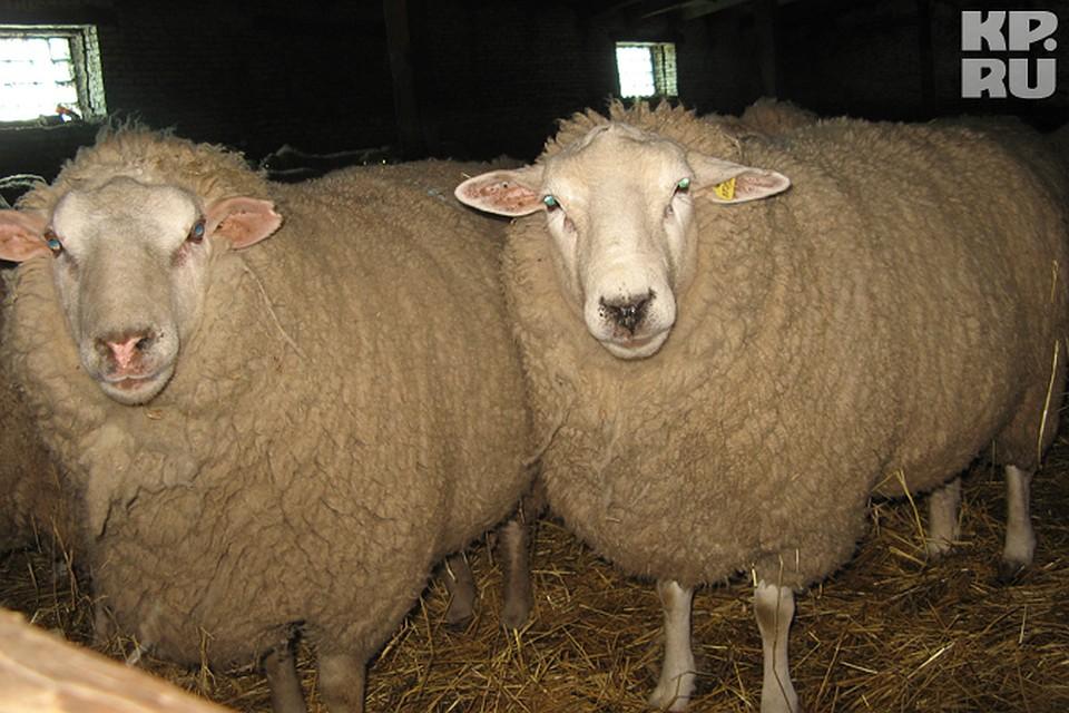 Владимирская область занимает место по размеру стада