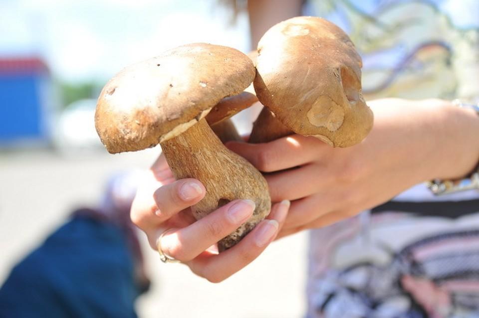Все за грибами!