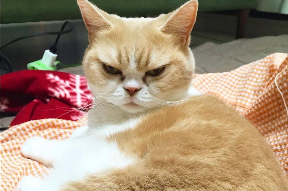 злая кошка картинки