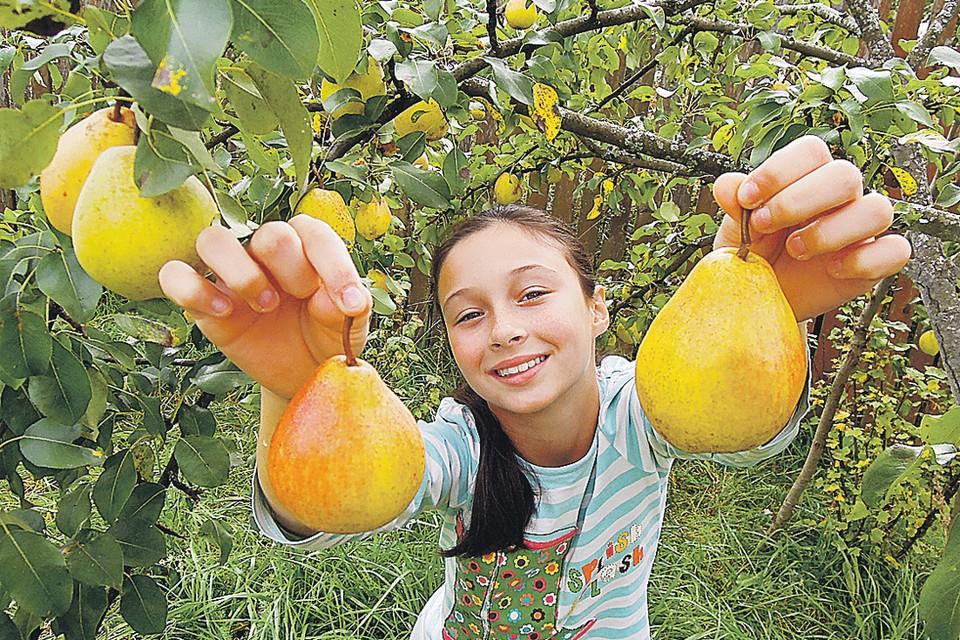 У добрых соседей и урожай богаче - на всех хватит! Фото: Александр КРАСНИК