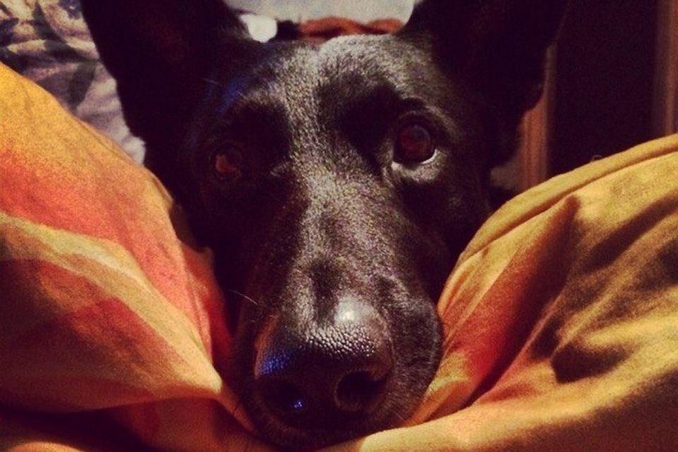Потап был дружелюбным псом. Никто не заслуживает такой смерти. Фото: соцсети