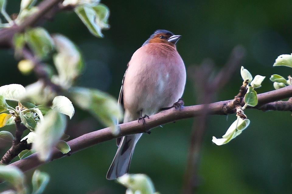 птицы воронежской области фото с названиями признаками осени фото