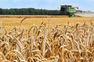 В России соберут рекордный урожай зерна