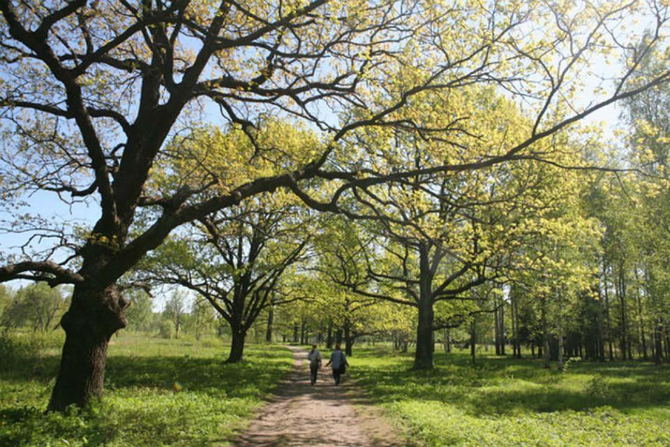 После войны Баболовский парк долго был заброшен