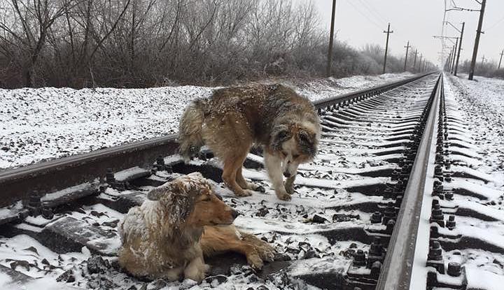 Помощь собакам удалось оказать только спустя два дня