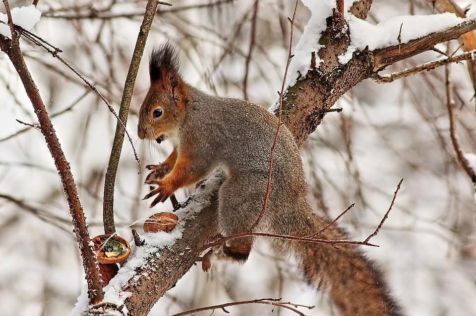 врачи считают животные леса удмуртии фото его поистине сказочна