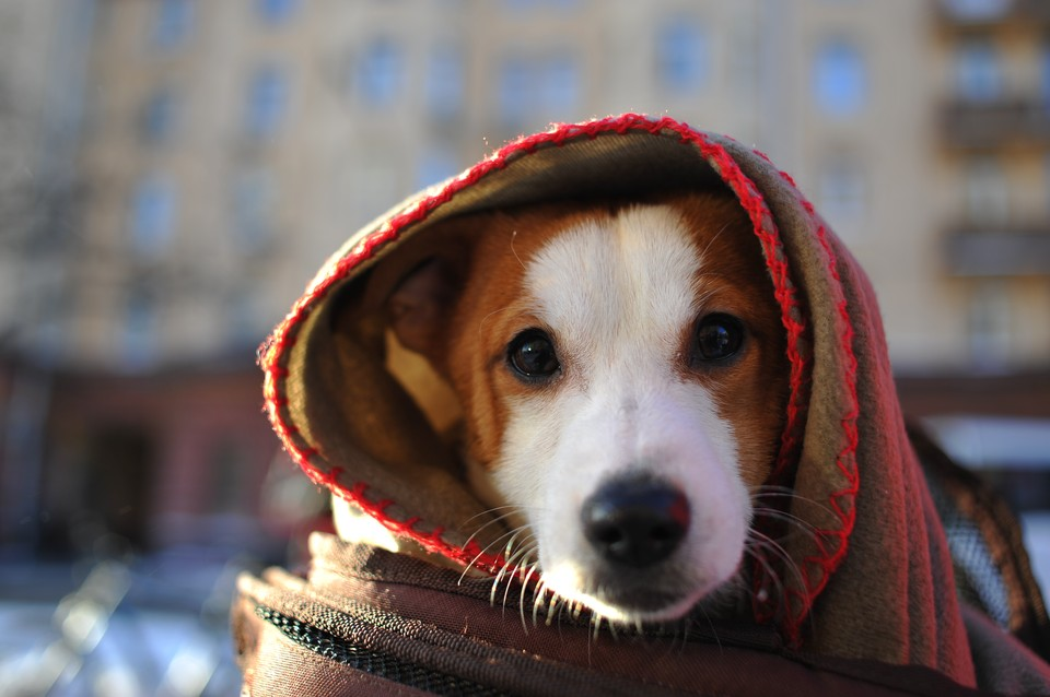 По статистике, в Германии 7,4 миллиона домашних собак