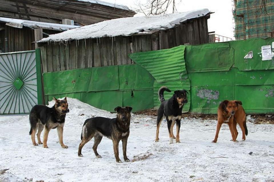 В Махачкале местные жители, в отместку за смерть девятилетней девочки, начали массовый отстрел бродячих собак