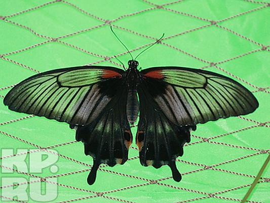 Ночные бабочки на ночь Короленко ул. интим Полтавская