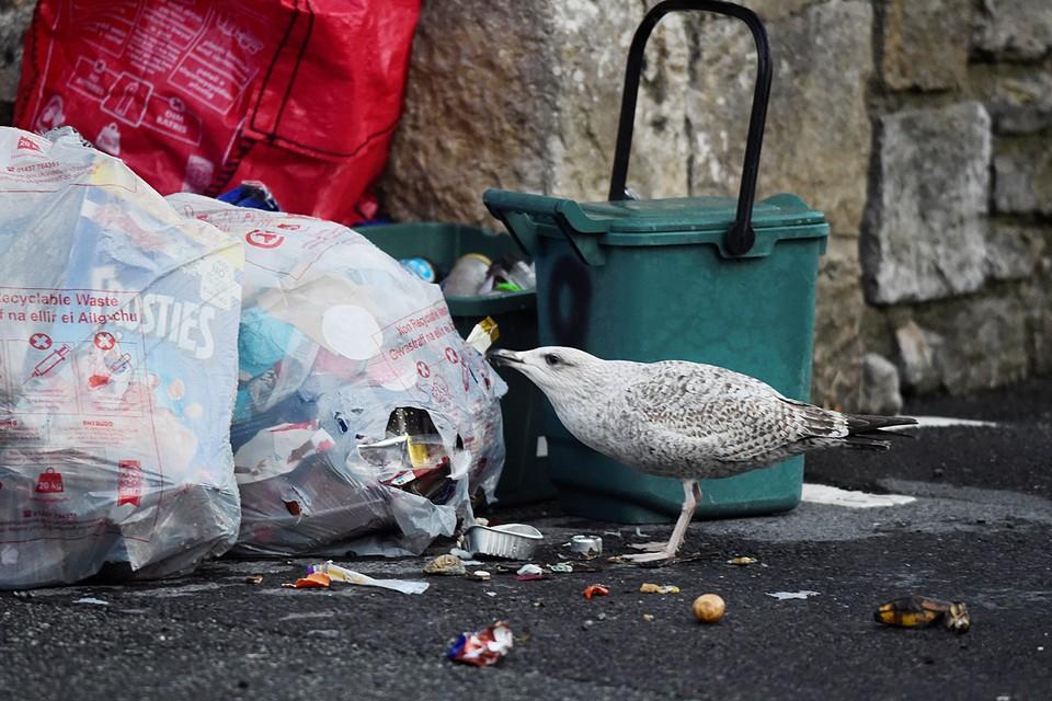 Из-за карантина по случаю пандемии улицы Британии оказались завалены тоннами мусора