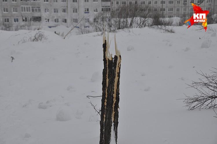 Лавина ломала деревья на своем пути.