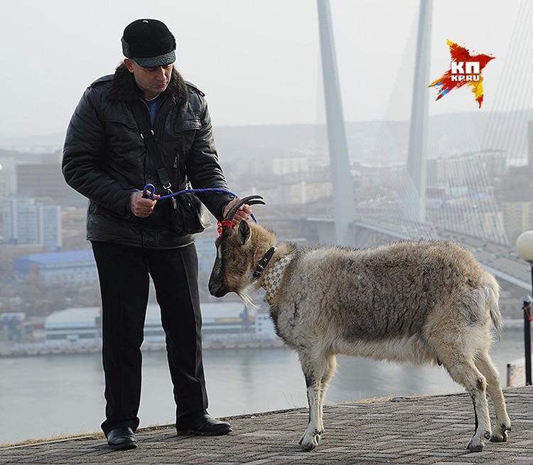 Накануне встречи с женихом козе Меркель показали достопримечательности Владивостока