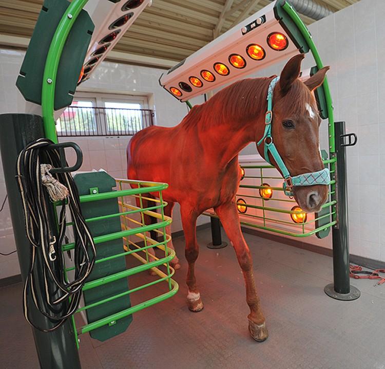 Солярий помогает лошади быстрее восстанавливаться после интенсивных тренировок.