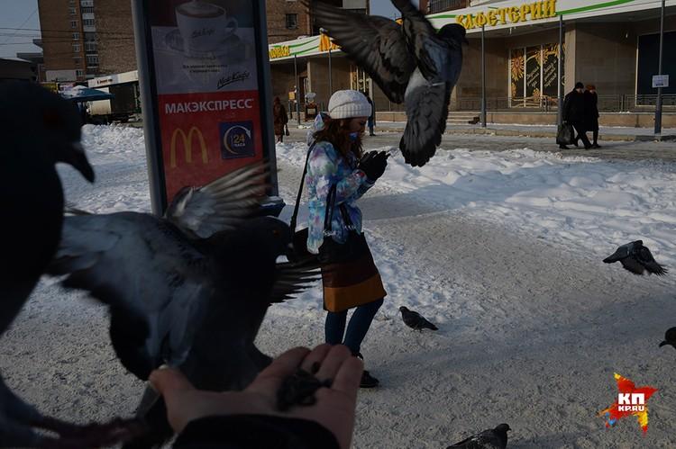 Уральские голуби