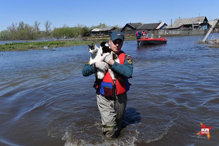 Жалобно мяукая, изголодавшиеся животные смело спускались с заборов на руки спасателей