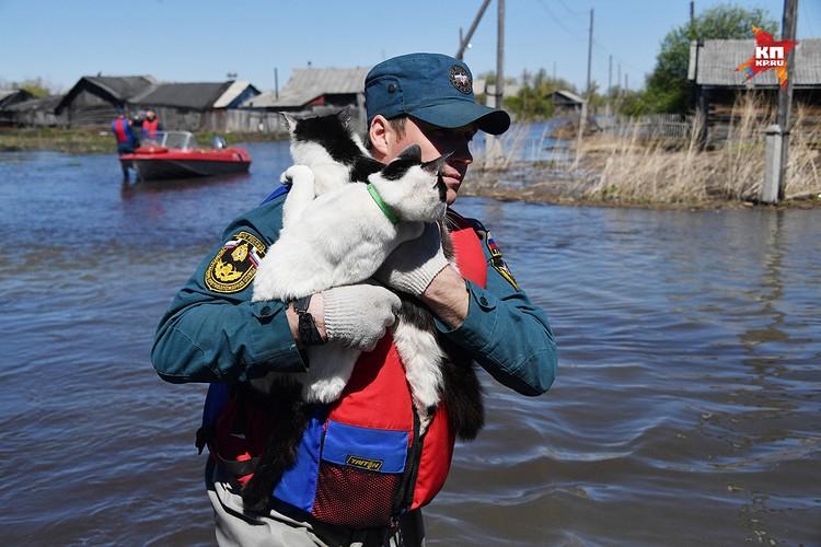 Спасатели не смогли бросить в затопленных домах одиноких мурок