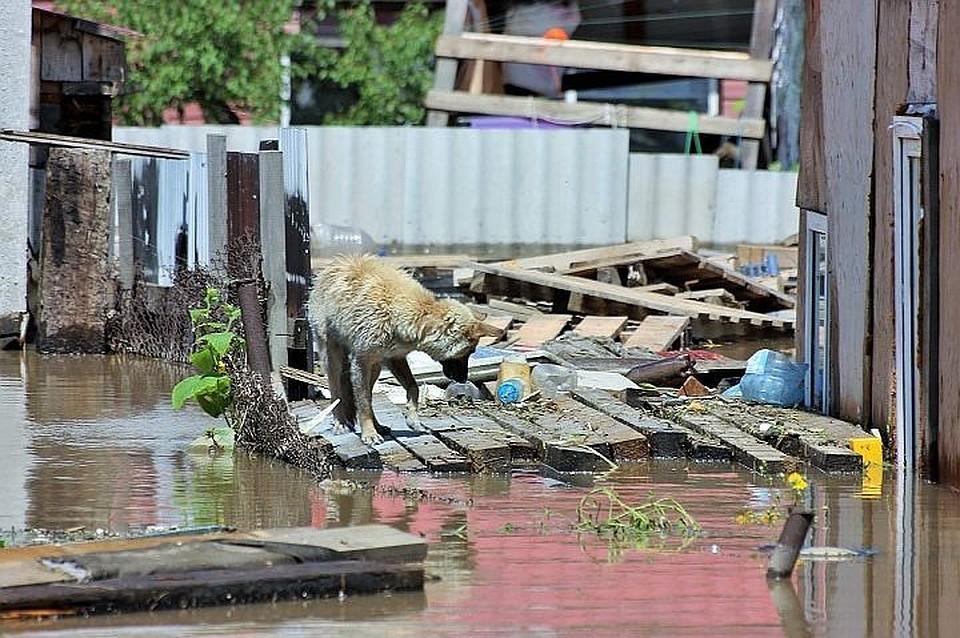 наводнение в уссурийске последние новости картинки запросу куртка свиной