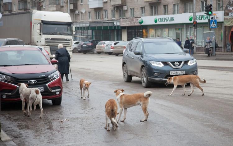 Бродячие псы пока остаются неизменным атрибутом мегаполиса.