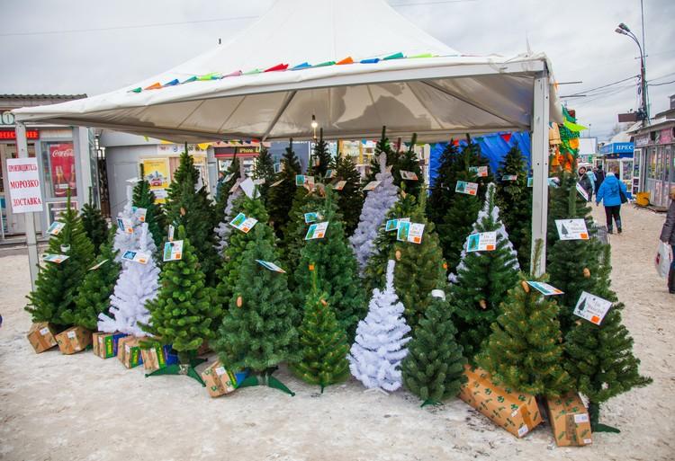 Выбор елок очень большой. Также на рынке можно сразу же подобрать разноцветную мишуру и игрушки, чтобы украсить ими зеленую красавицу