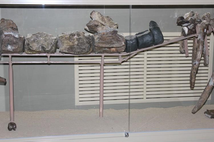 Кости скелета древнего кита были обнаружены в разрушающемся береговом обрыве на западном побережье Цимлянского водохранилища