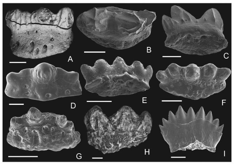 Зубы древнего животного способны рассказать о многом. Фото: kirj.ee