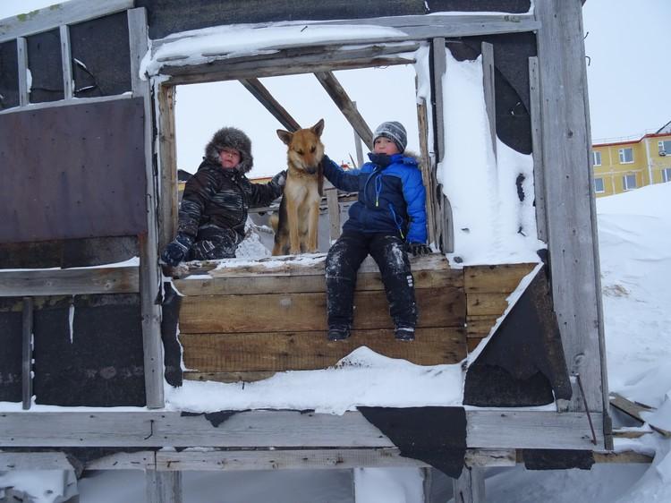 Собаки в Анадыре круглый год живут на улице. Природная адаптация и теплый мех позволяют им спать в 30-градусный мороз.
