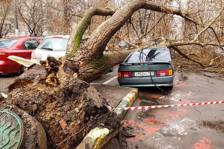 Упавшие деревья повредили множество машин.