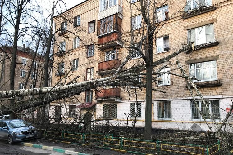 На востоке столицы ветки дерева обрушились на жилой дом, повредив его