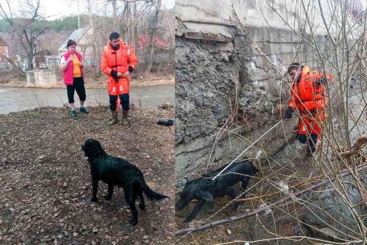 В Горно-Алтайске в эти же дни спасли собаку, которая оказалась в плену воды на маленьком островке.