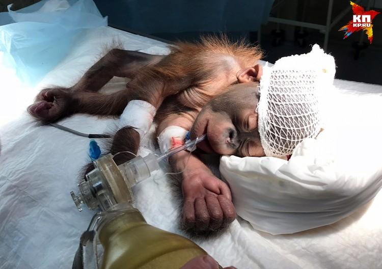 После рождения у малыша диагностировали травму черепа. Фото предоставлено Евгением Козловым, ветеринаром клиники Бэст.