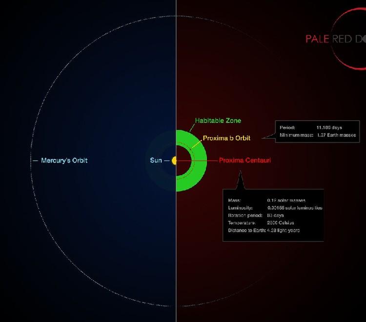 Орбита Proxima Centauri b (справа) легко поместилась бы внтури орбиты Меркурия.