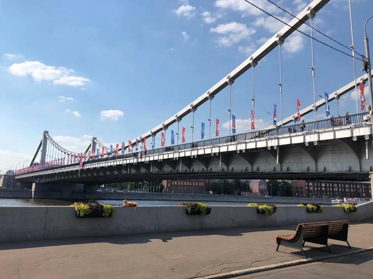 Для кота Крымский мост - родной дом. Фото: Кот Моста/Facebook.
